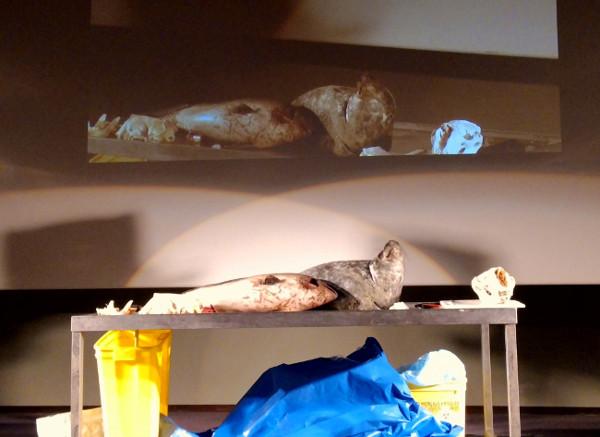 cadavres de marsouin et de phoque pour l'autopsie