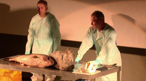 les conférenciers qui vont autopsier les animaux marins