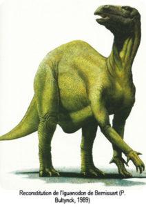 Reconstitution d'un iguanodon datant de 1989